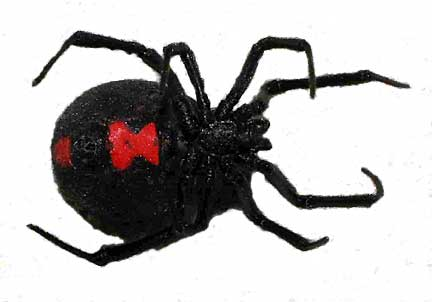 black widow spider bite pictures. lack widow spider bites